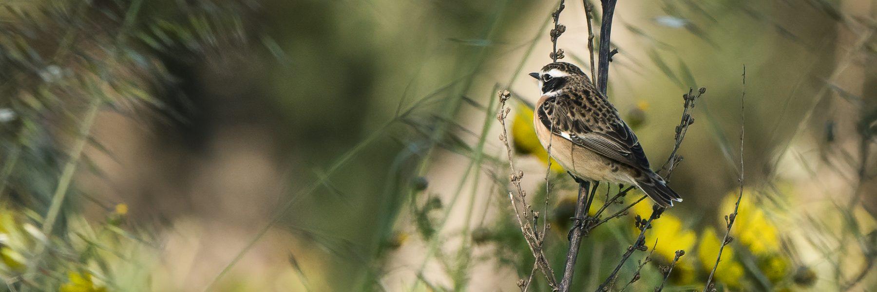 Marco Andriola Wildlife Photography